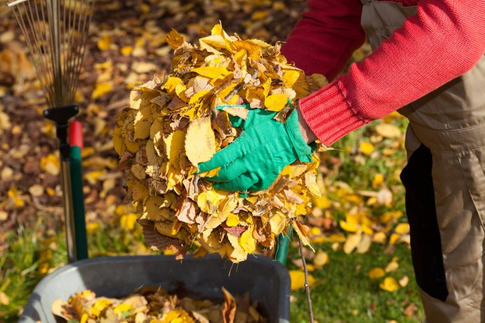 A Guide to Autumn Garden Clearance